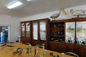Zoology Room