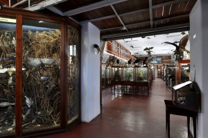 Museum of Zoology (Second Room)