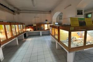 Vivarium (Reptiles Room)